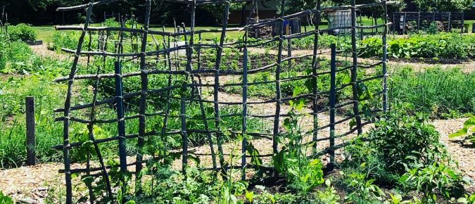 COVID-19 resources for community gardens