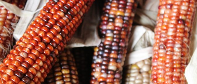 Tribal food sovereignty resources