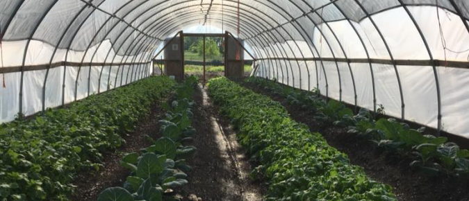 Black and African American food sovereignty resources